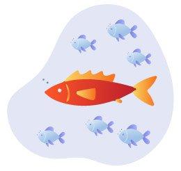 Vá atrás dos peixes grandes